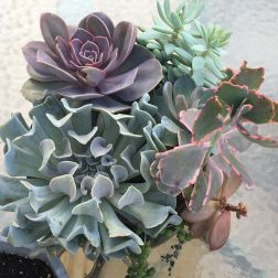My succulents are getting so big! Repot soon?